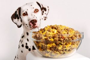 Comida-para-Cães