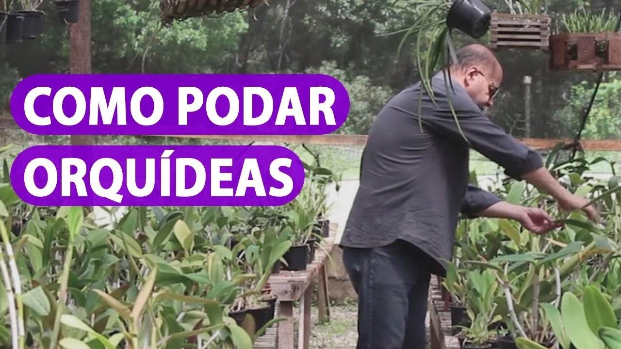 como_cultivar_orquideas